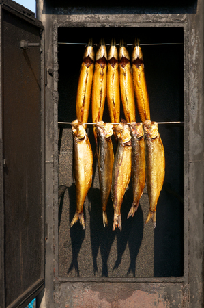 Rustic smoke oven with 10 golden brown fishes hanging side by side in sunshine; Preparation of fish; Smoked fish Standard-Bild