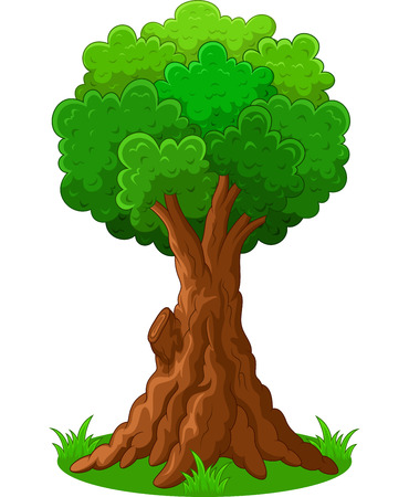 isolated tree: Green tree cartoon