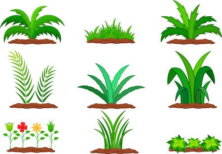 Set of green plant on a white background Vektoros illusztráció