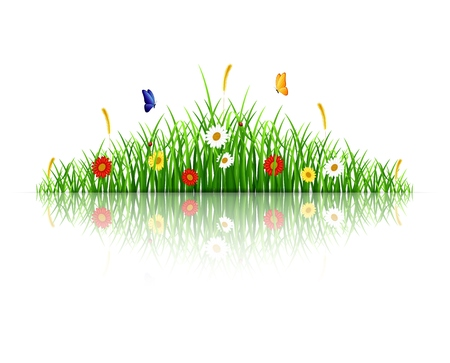 sedge: Spring green grass with flowers and butterflies on white background Illustration