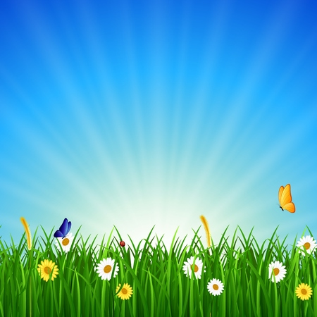 green grass and blue sky: Nature background with green grass, blue sky and bright sun