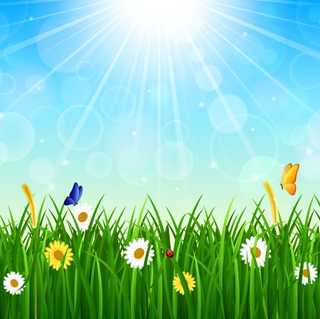summer border: Nature background with green grass, blue sky and bright sun