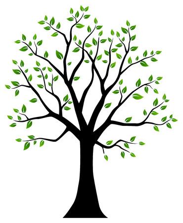 Sin Patrón, Con La Silueta Verde De Ramas De árboles De Abedul Con ...