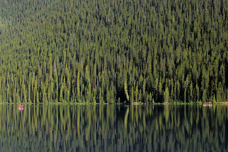 lost lake: Green reflecting forest