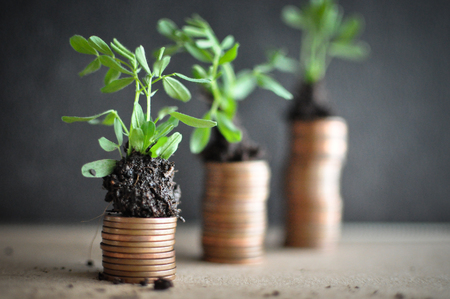 Coins with young plants in soil. Money growth concept Banco de Imagens