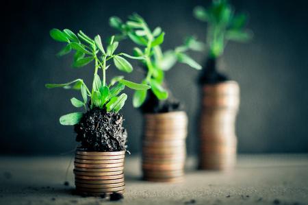 토양에 젊은 식물 동전입니다. 돈 성장 개념