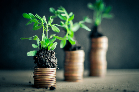 sprouts: Coins with young plants in soil. Money growth concept Stock Photo