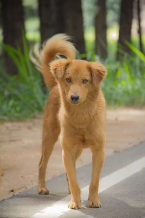 Steet dog found on Srilakan street with lonely feel. photo