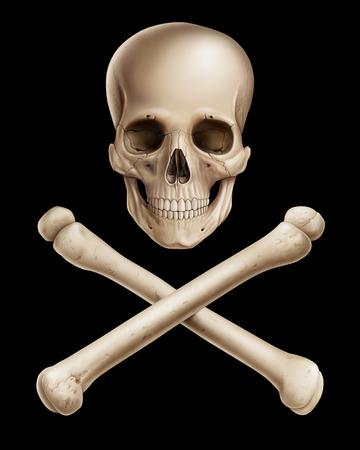 Danger, Human skull illustration, digital painting