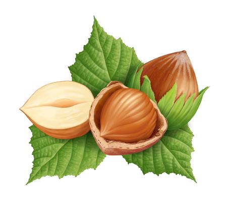 Hazelnuts and leaves illustration, digital painting