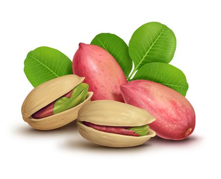 Pistachio nuts illustration, digital painting Stock fotó