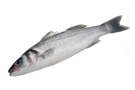 Bass fish isolated on white background Reklamní fotografie