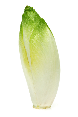 Fresh endive isolated on white background