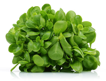 Fresh purslane isolated on white background Фото со стока