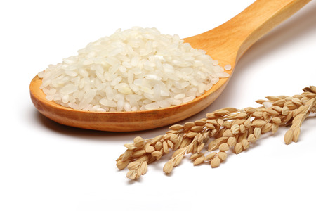 White rice in a wooden spoon and rice ear isolated on white background