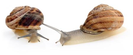 Snail crawling isolated on white background