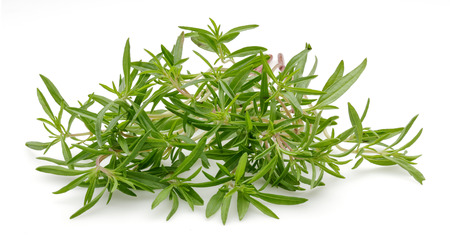 Thym vert frais isolé sur fond blanc