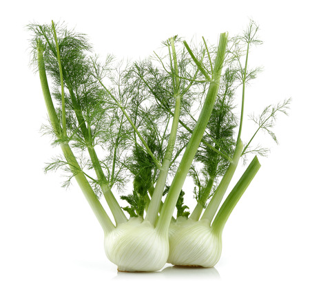 Fresh fennel bulbs isolated on white background