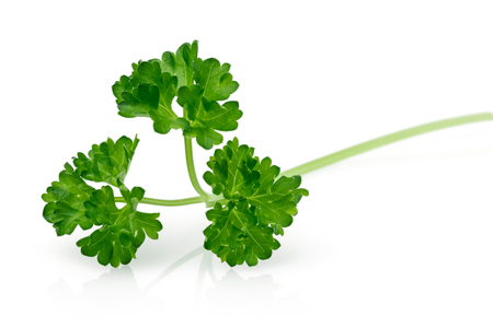 Fresh green parsley isolated on white background Stok Fotoğraf