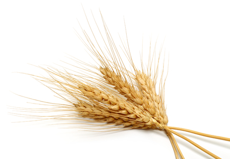 Bunch of wheat ears isolated on white background Reklamní fotografie