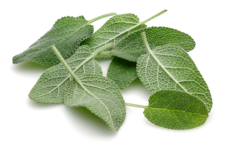 Green sage leaves isolated on white background