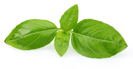 Branch of green basil leaves isolated on white background 写真素材 - 122220422