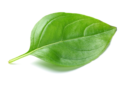 Fresh green basil leaves isolated on white background 写真素材 - 122220425