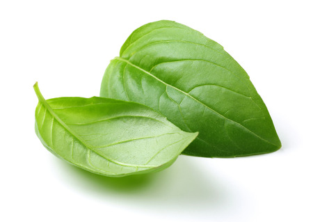 Fresh green basil leaves isolated on white background 写真素材 - 122220426