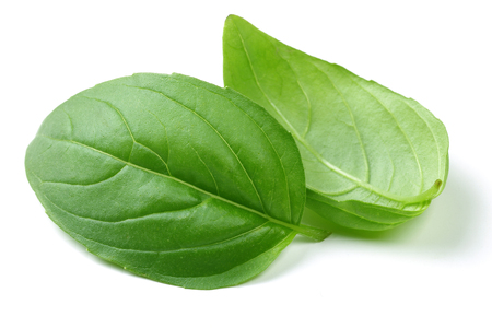 Fresh green basil leaves isolated on white background 写真素材