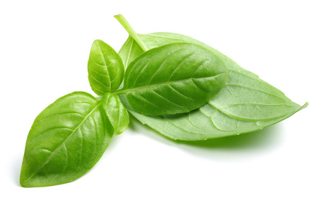 Fresh green basil leaves isolated on white background 写真素材 - 122220428