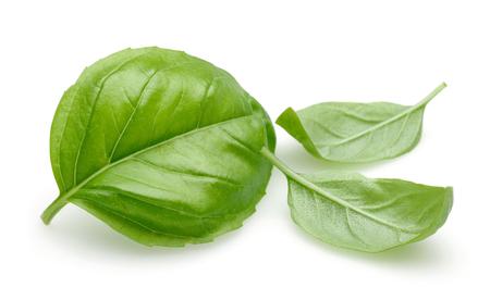 Świeże zielone liście bazylii na białym tle