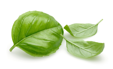 Fresh green basil leaves isolated on white background 写真素材 - 122220503