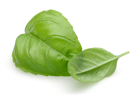 Fresh green basil leaves isolated on white background 写真素材 - 122220504