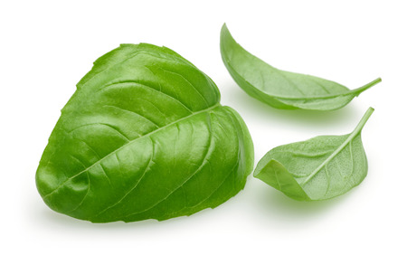 Fresh green basil leaves isolated on white background 写真素材 - 122220506