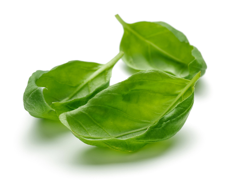 Fresh green basil leaves isolated on white background 写真素材 - 122220759