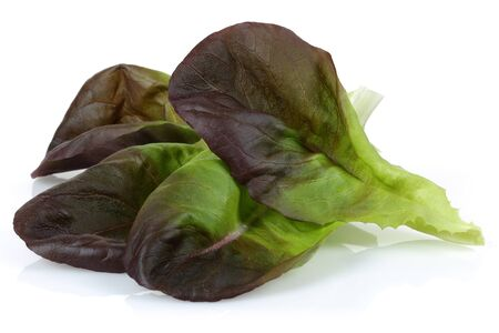 Fresh red lettuce isolated on white background Banco de Imagens