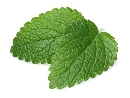 Fresh lemon balm leaves or melissa isolated on white background