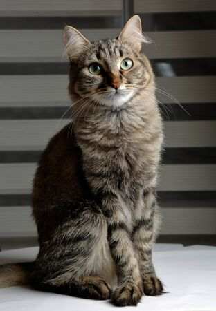 Cute black and grey cat sitting with dignity with a curious look Stok Fotoğraf - 130087950