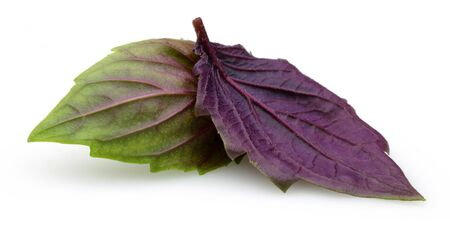 Purple basil leaves isolated on white background