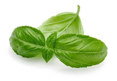 Green basil leaves isolated on white background Stok Fotoğraf - 130426180
