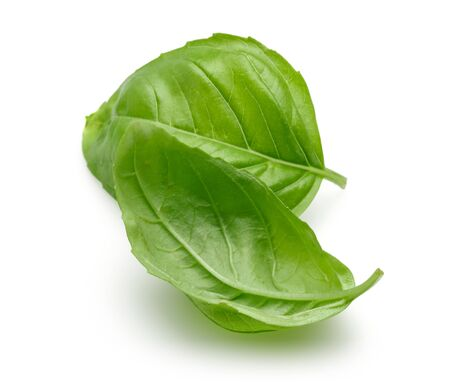 Green basil leaves isolated on white background Stok Fotoğraf - 130426186