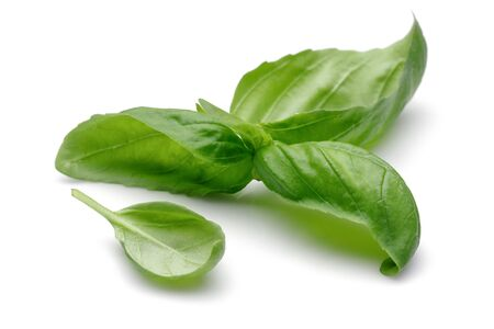 Green basil leaves isolated on white background Stok Fotoğraf - 130426256