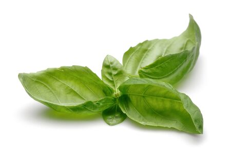 Green basil leaves isolated on white background Stok Fotoğraf - 130426260