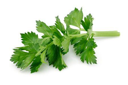 Fresh celery leaves isolated on white background. Studio shot. Stok Fotoğraf - 130426413