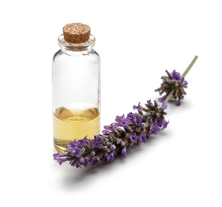 Fresh lavender and a bottle of lavender oil isolated on white background Stok Fotoğraf - 130426486