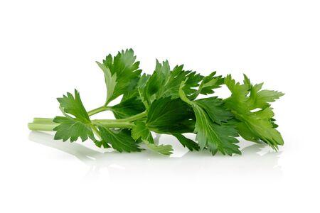 Fresh celery leaves isolated on white background. Studio shot.
