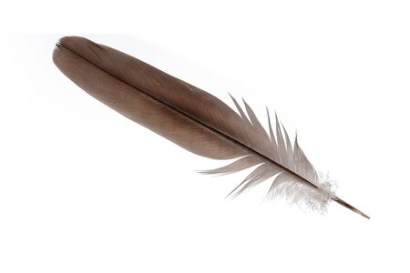 Feather isolated on white background 版權商用圖片