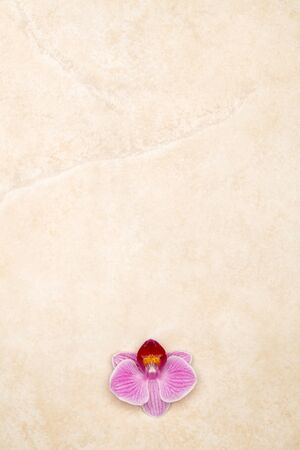Purple orchid on marble background, vertical letter