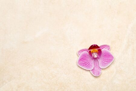 Purple orchid on marble background, horizontal letter