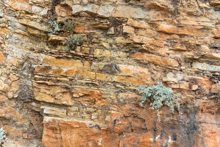 Yellow flowering plant on background of rock layers